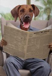 Journal du dimanche toile chien